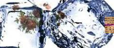 و-اما-کوچه-درختی-علی-شروقی