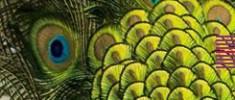 نگاهی-به-طاووسها-لیدا-طرزی